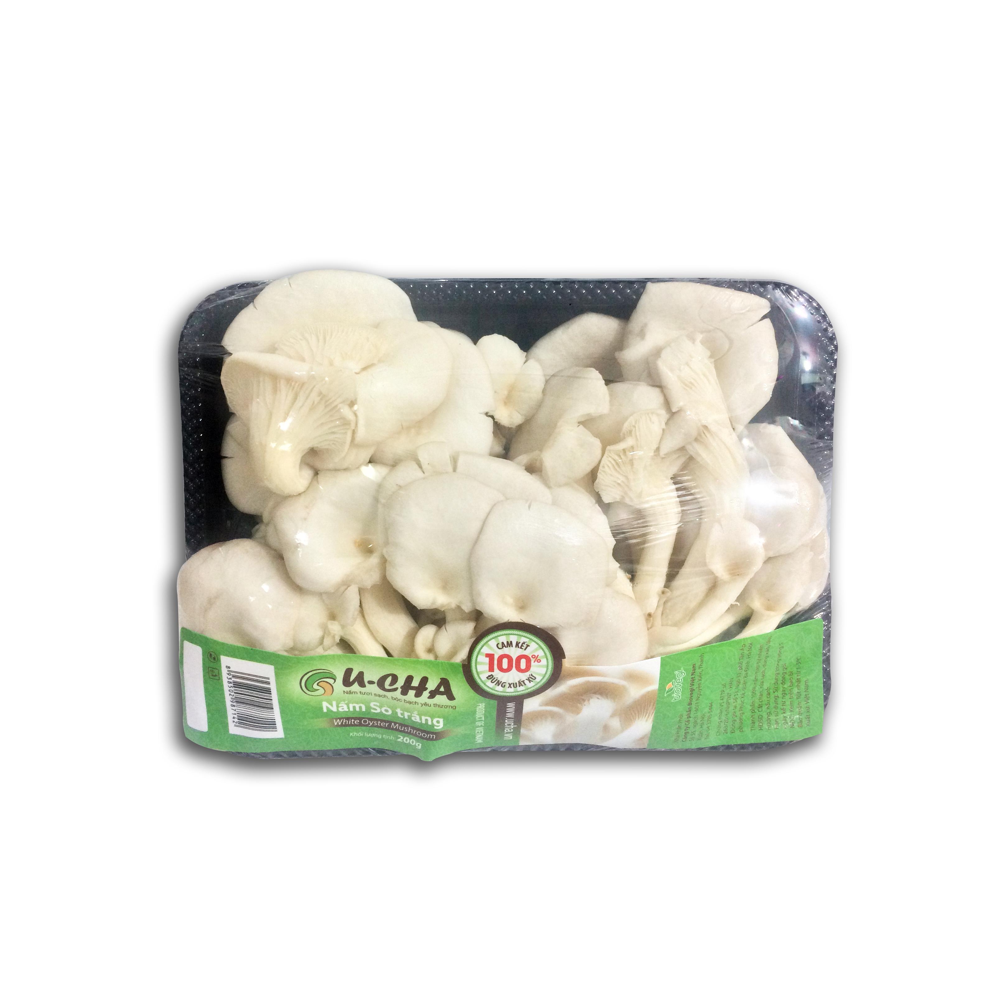 Vietnamese Oyster mushroom